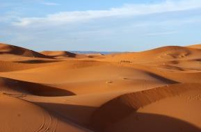 Caravanes de dromadaires dans les dunes de Merzouga